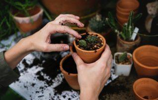 Néhány tipp kertészkedéshez