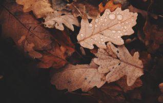 Itt az ősz, több a kertimunka
