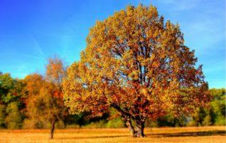 Az őszi kert