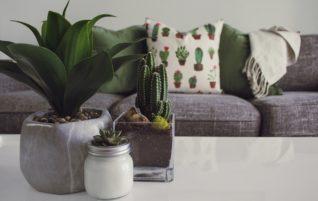 Fény a  szobanövényeknek